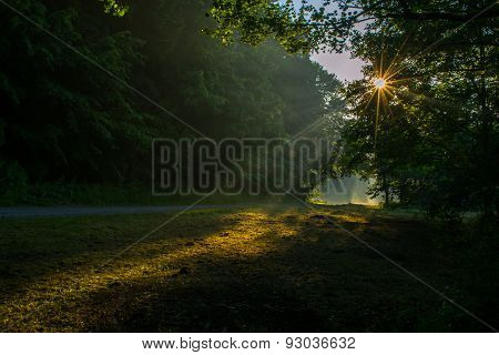 Through Treetops