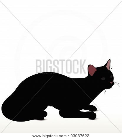 Cat Silhouette In Sitting Pose