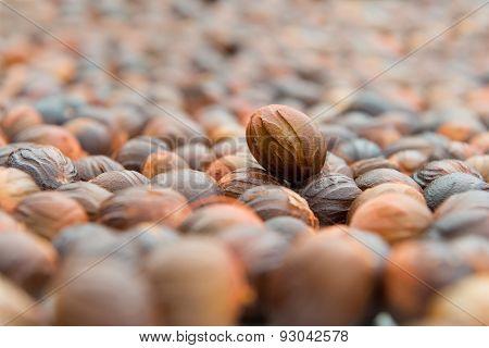 Nutmeg