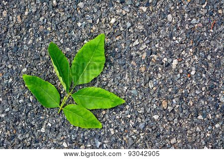 Green Leaf On The Pavement