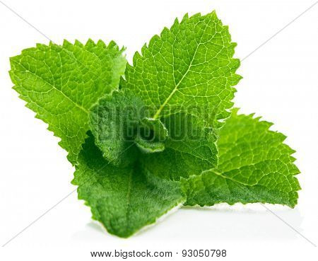 Fresh leaf mint. Isolated on white background