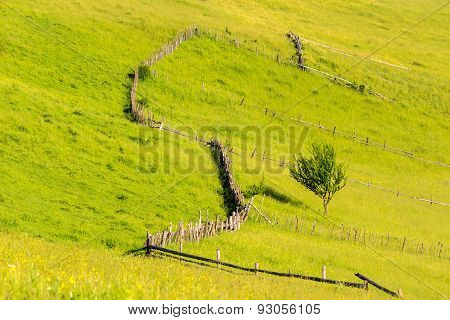 Fence On Hillside Meadow With Tree