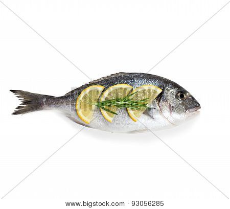 Dorado Fish Isolated On White Background.