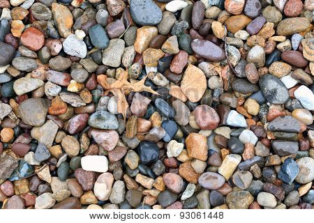 Rocks and Leaves on Ground