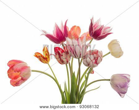 Beautiful Bouquet Of Bright Tulips