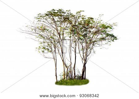 Group Of Green Trees Isolated On White Background