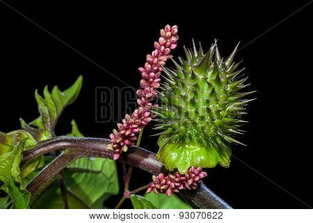 Defensive Spiky Green Plant With Pink Flower