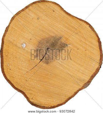 Tree Stump Isolated On White Background, aspen