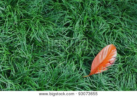 Fallen Orange Leaf On The Green Grass