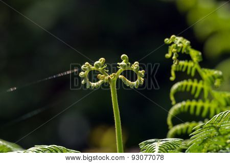Abstract Fern in the forest