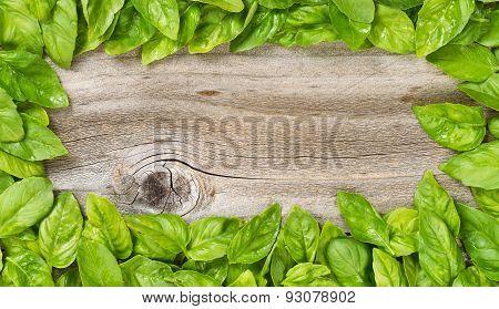 Border Of Fresh Large Basil Leafs On Aged Wood