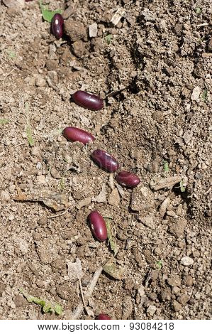 Seed for Planting