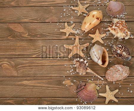 Variety Seashells