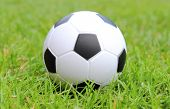 stock photo of stress-ball  - Small black and white stress ball lying on the green grass soccer ball on the grass - JPG
