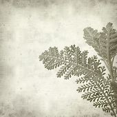 pic of tansy  - textured old paper background with silver tansy leaf - JPG