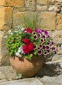 image of petunia  - Colorful plants in a terracotta pot including begonia petunia fuchsia impatiens - JPG