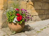 stock photo of petunia  - Colorful plants in a terracota pot including begonia petunia fuchsia impatiens - JPG