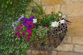 pic of petunia  - Colorful plants in wall mounted wrought iron basket including begonia petunia ivy - JPG