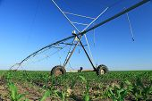 pic of sprinkler  - Crop Irrigation using the center pivot sprinkler system - JPG