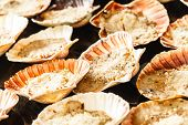 foto of scallop shell  - Scallops in the shell - JPG