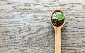 stock photo of chocolate spoon  - Wooden Spoon Of Chocolate Cream With Fresh Mint - JPG
