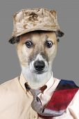 pic of crazy hat  - Funny looking doggy wearing hat and tie with crazy eyes - JPG