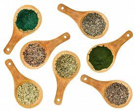 foto of irish moss  - seaweed and algae nutrition supplements  - JPG
