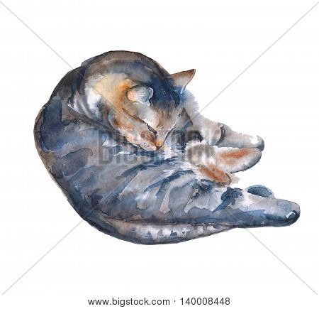 cat illustration on a white background. pet. watercolor illustration.
