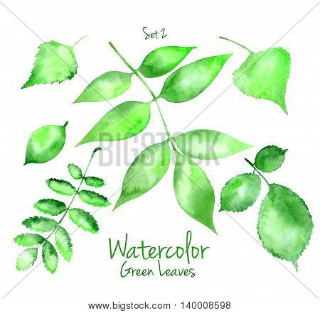 Collection of green summer watercolor leaves isolated on white background. Set of maple, oak, rowan, birch, huzel and pear tree leaves