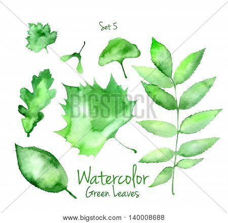 Collection of green summer watercolor leaves isolated on white background. Set of ash, ginkgo, oak and sycamore tree leaves