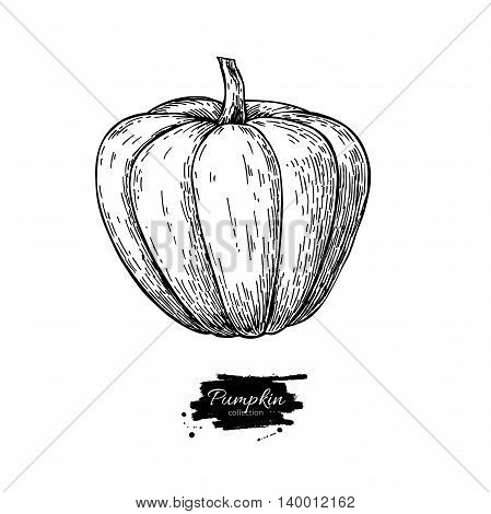 Pumpkin vector drawing. Isolated hand drawn object. Vegetable engraved style illustration. Detailed vegetarian food sketch. Farm market product.