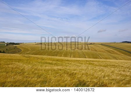 Yorkshire Wolds Barley