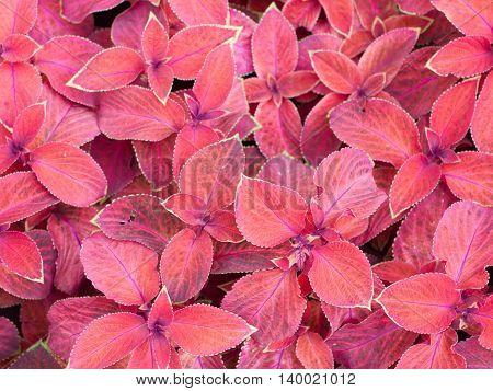 Decorative Red Plants
