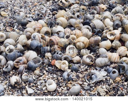 The Surface Of The Sea Coast With Blur Background