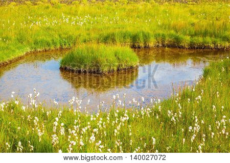 Lovely pond with thermal water. On small islands grows tall grass. Iceland in July