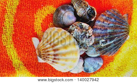 seashells in the towel ,very colorful and beautiful