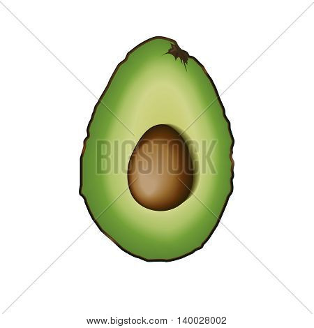 Cut half of avocado. Isolated illustration. Vector. Green ripe avocado.