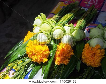 Fresh lotus with yellow  flower for worship