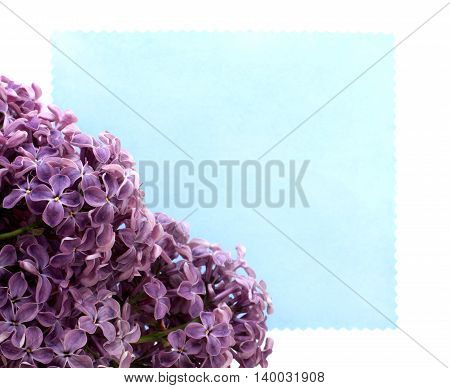 bouquet of violet flowers on the background of the card for inscriptions / soft lilac flowers