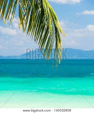 Palms Overhanging Jungle and Sea