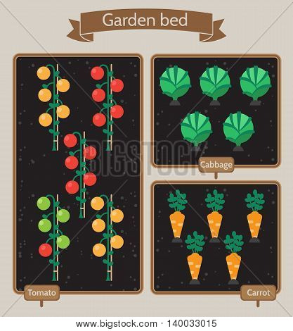 Vegetable garden planner flat design.Beds with cabbage carrots tomatoes