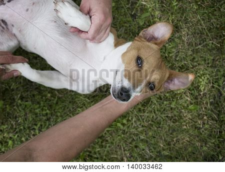An injured ot disabled dog and human hands giving some help overhead shot with selective focus