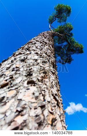 Tree Trunk Leading Canopy with Clear Blue Sky