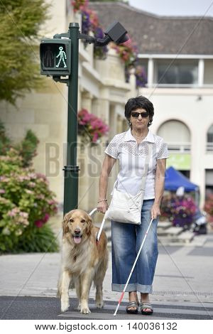 Senior blind woman crossing the street with help of guide dog