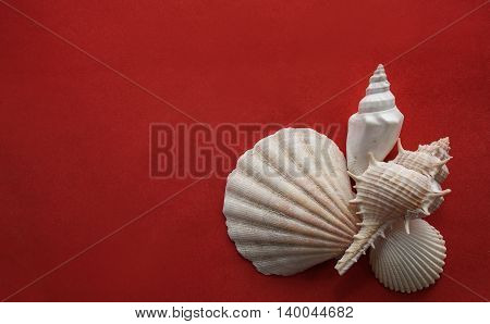 Seashells composition laying on red crimson background.