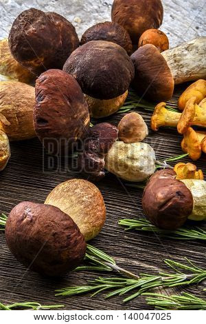 Chanterelle mushrooms and Porcini mushrooms on a wooden Board