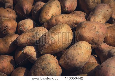 many raw sweet potatoes background - sweet potato