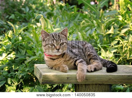 beautiful little kitten with beautiful eyes and a beautiful color in nature