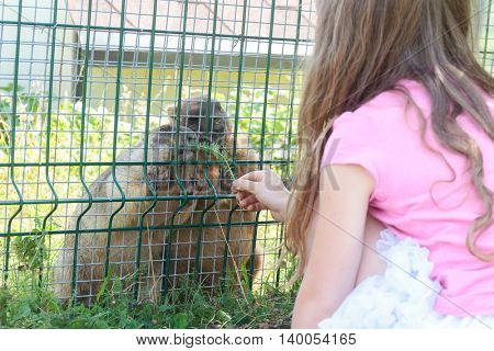 young adorable child girl having fun in zoo, animal park