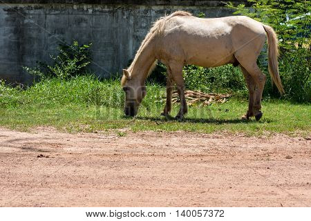 White horse eating grass green, nature, pasture,
